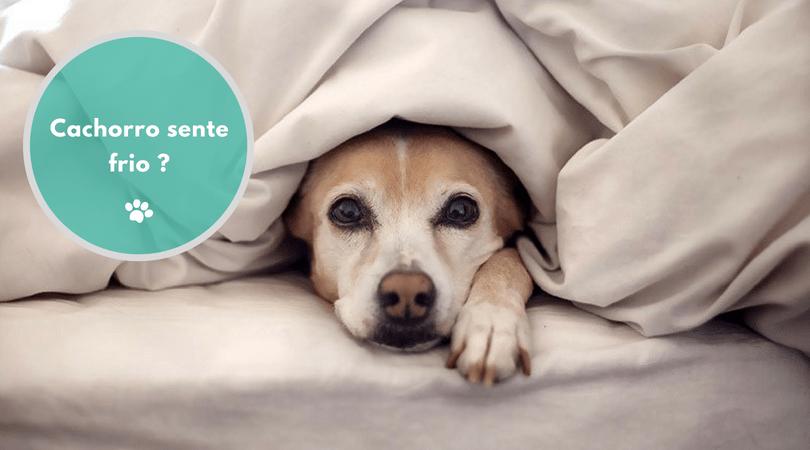 cachorro sente frio  - Cachorro sente frio?