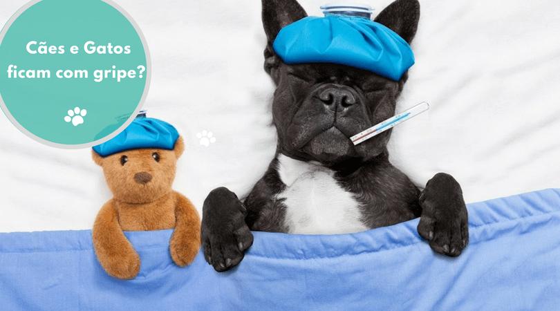 caes e gatos ficam com gripe 1 - Cães e gatos pegam gripe?