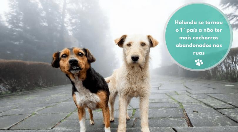 holanda se tornou o 1o pais a nao ter mais cachorros abandonados nas ruas 1 - Holanda se tornou o 1º país a não ter mais cachorros abandonados nas ruas