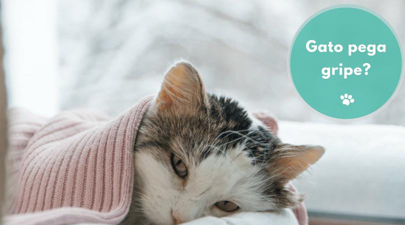 gato pega gripe  - Gato pega gripe?