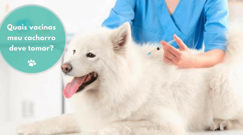 quais vacinas meu cachorro deve tomar  - Quais vacinas meu cachorro deve tomar?