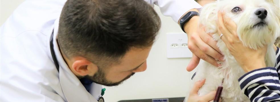 petcare oncologia - Oncologia