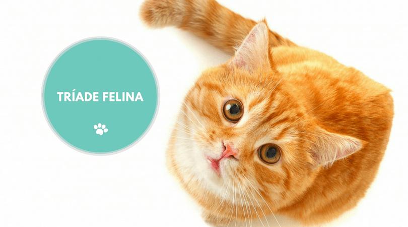 triade felina1 - TRÍADE FELINA