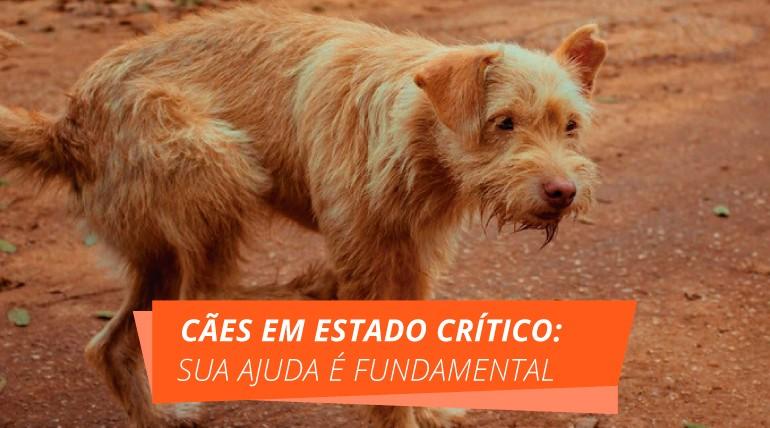 padraoblog - Cães em estado crítico: sua ajuda é fundamental!