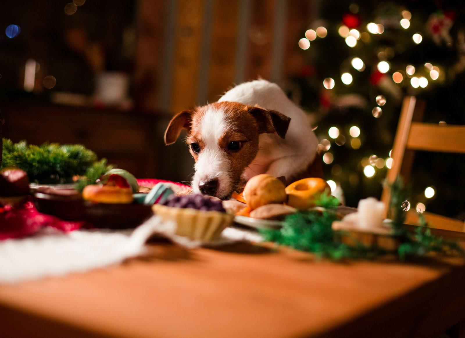 cuidado com as comidas da ceia das festas de fim de ano - Cuidado com as comidas da ceia das festas de fim de ano