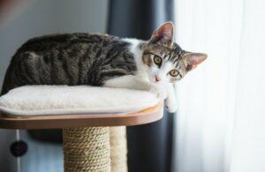 viajar e deixar gatos em casa 300x195 - Viajar com Gatos - Dicas