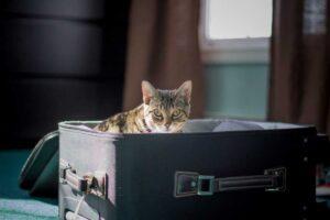 viajar e levar o gato junto 300x200 - Viajar com Gatos - Dicas