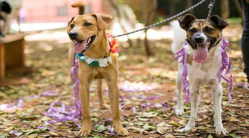 cuidados com os pets no carnaval - Bloco Pet no Carnaval