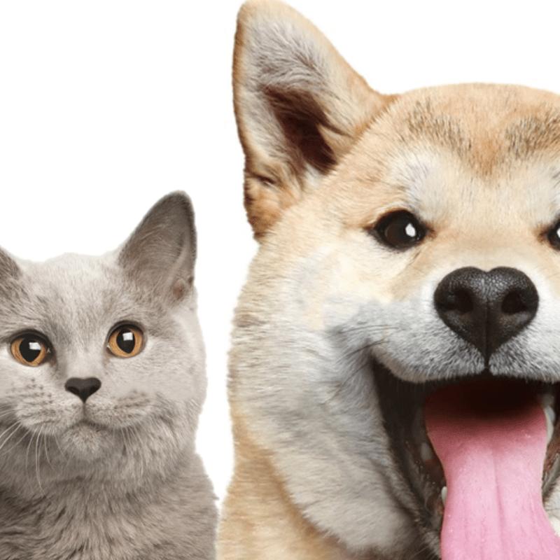 palestra vet we care fevereiro 2019 - Palestra Vet We Care Fevereiro de 2019