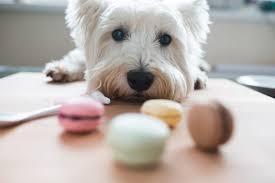 download 1 - 10 alimentos que podem matar seu cachorro
