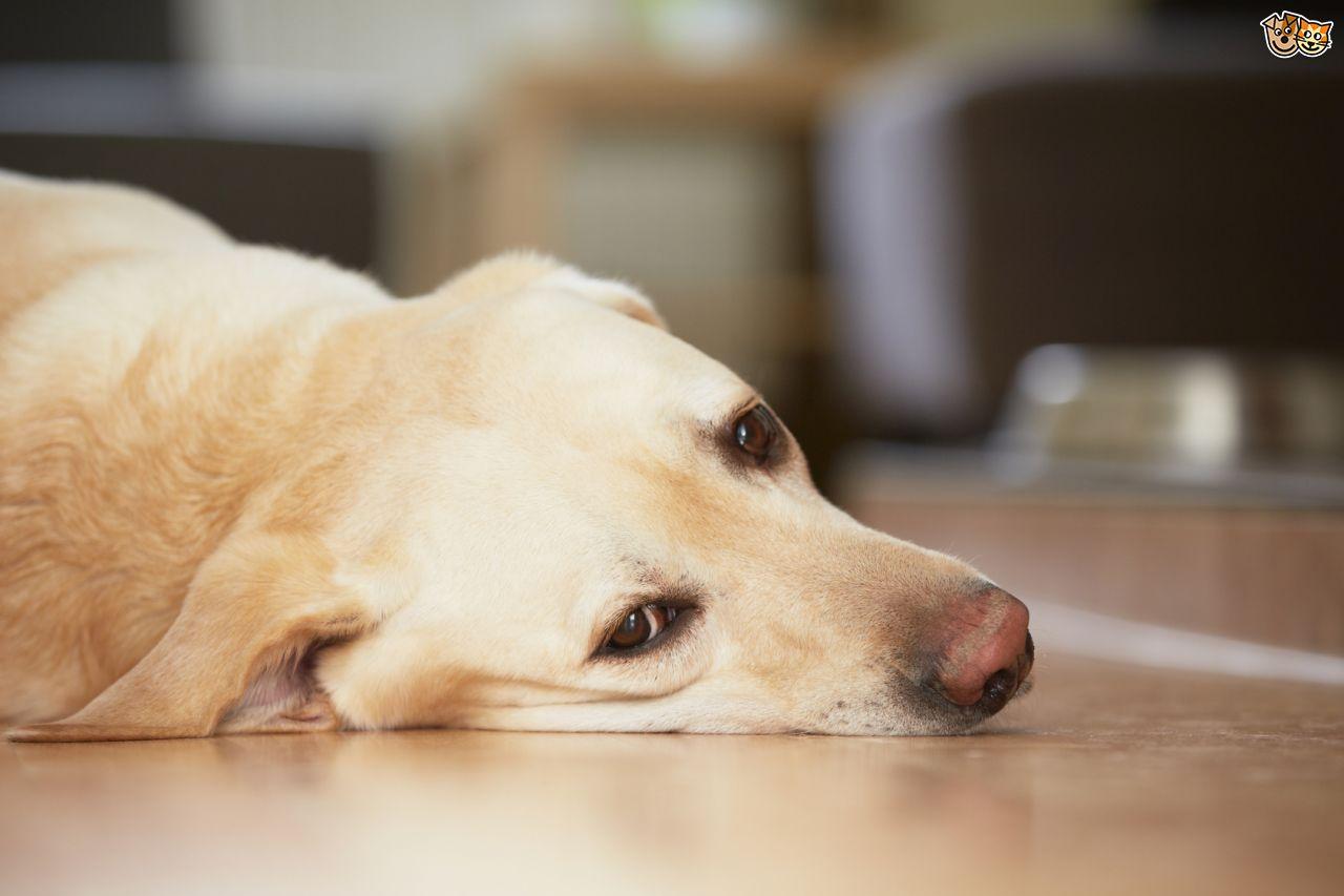 subtle symptoms of ill health in dogs 5257caea079c4 - Cachorra com corrimento marrom