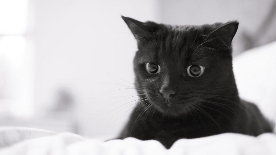 como saber se o coco do meu gato esta normal - Como saber se o coco do meu gato está normal?