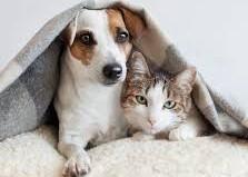 doencas de inverno cao e gato 1 - As principais doenças do inverno em cachorros e gatos
