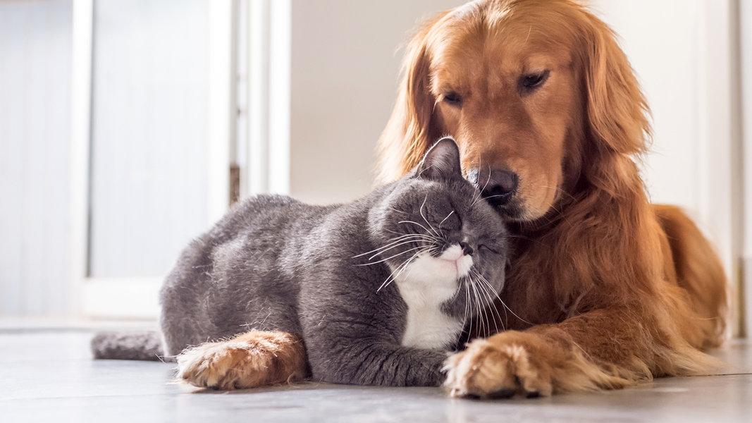 exame de sangue detecta precocemente doenca renal caes e gatos sdma - Exame de sangue detecta precocemente Doença renal Cães e Gatos (SDMA)