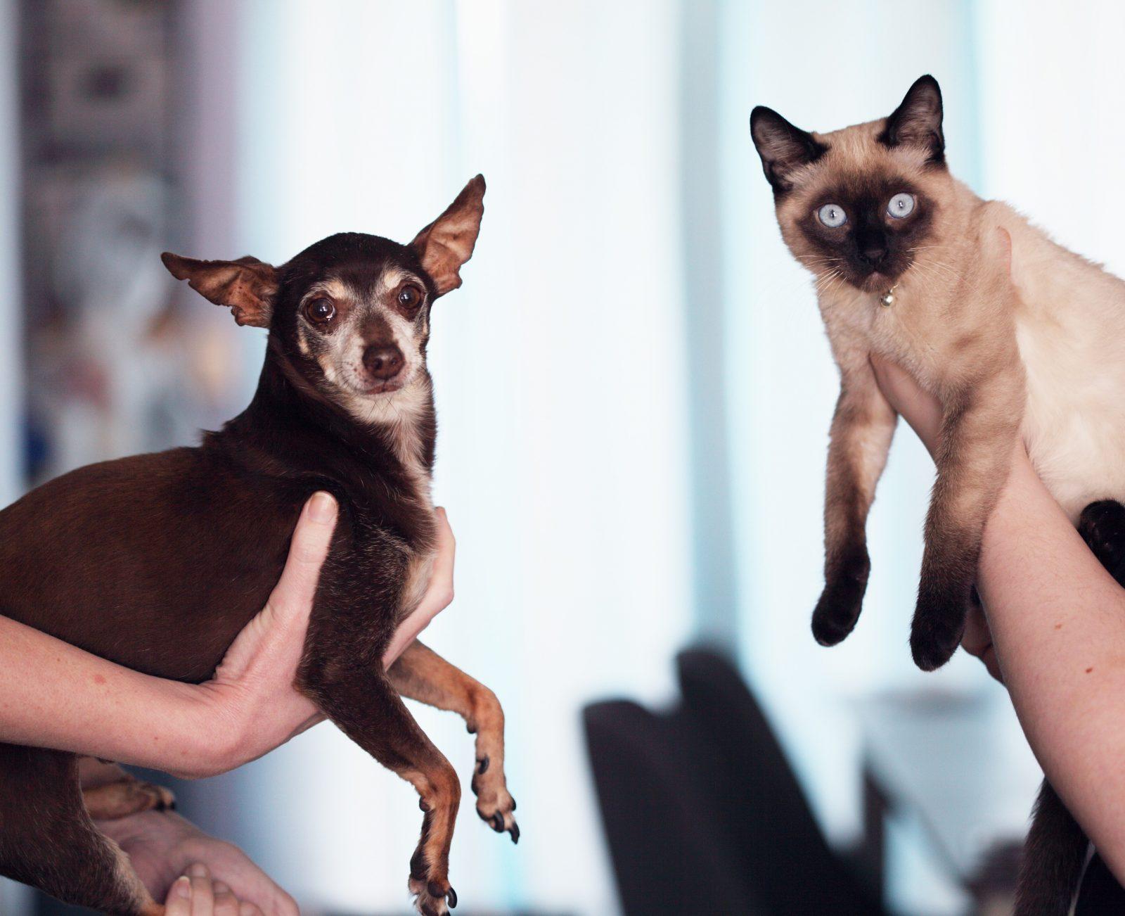 rim - Dia Mundial do Rim: Exame de sangue detecta precocemente Doença renal Cães e Gatos (SDMA)