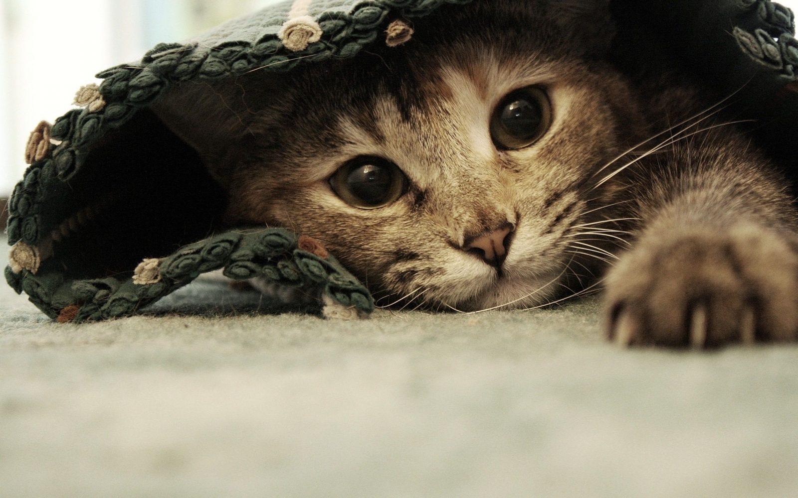 gato com medo de trovao - Cachorro e gato com medo de raio e trovão