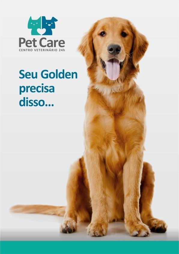 golden - Golden Retriever: O cão mais amado do mundo!