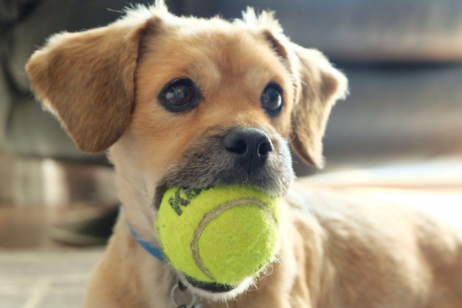 his toy dont touch t20 epewoj 5ad0cb6f43a1030037f6ae6d - Meu cachorro engoliu o brinquedo e agora?