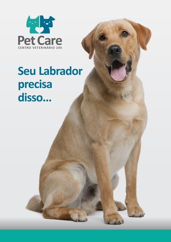 labrador - Labrador: O cão mais feliz do mundo!