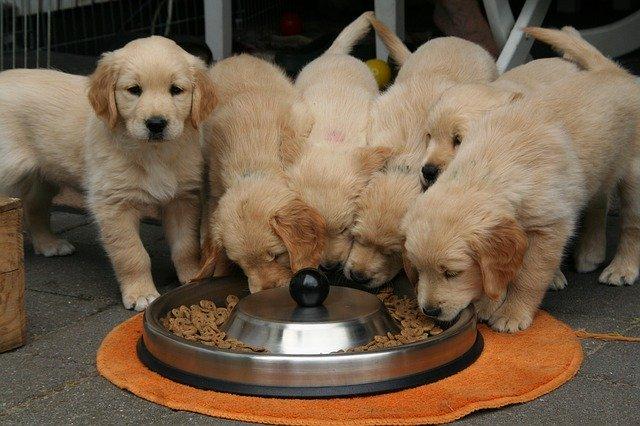Nutrição cães e gatos