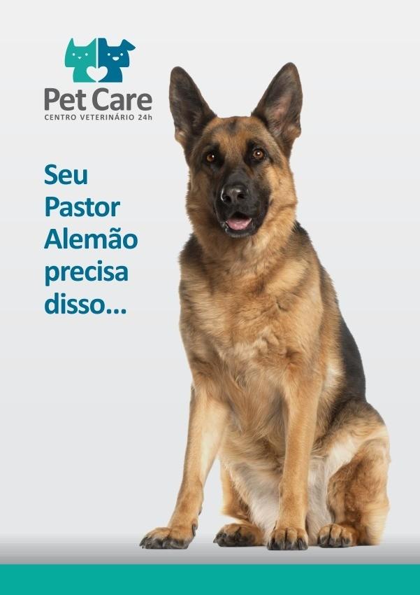 pastor - Pastor Alemão: O cão mais fiel do mundo!