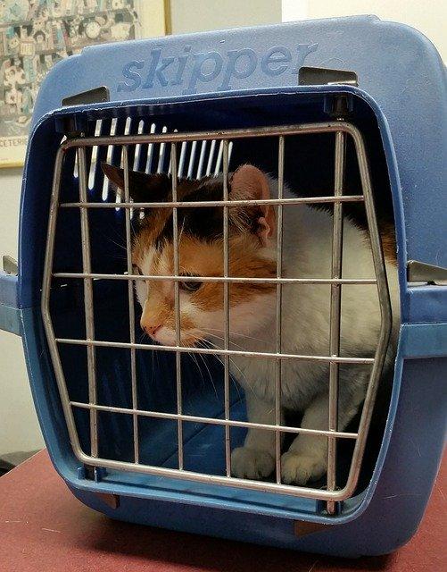 transporte gato
