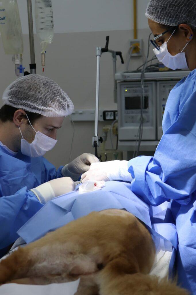 Cirurgia oftalmológica em cão