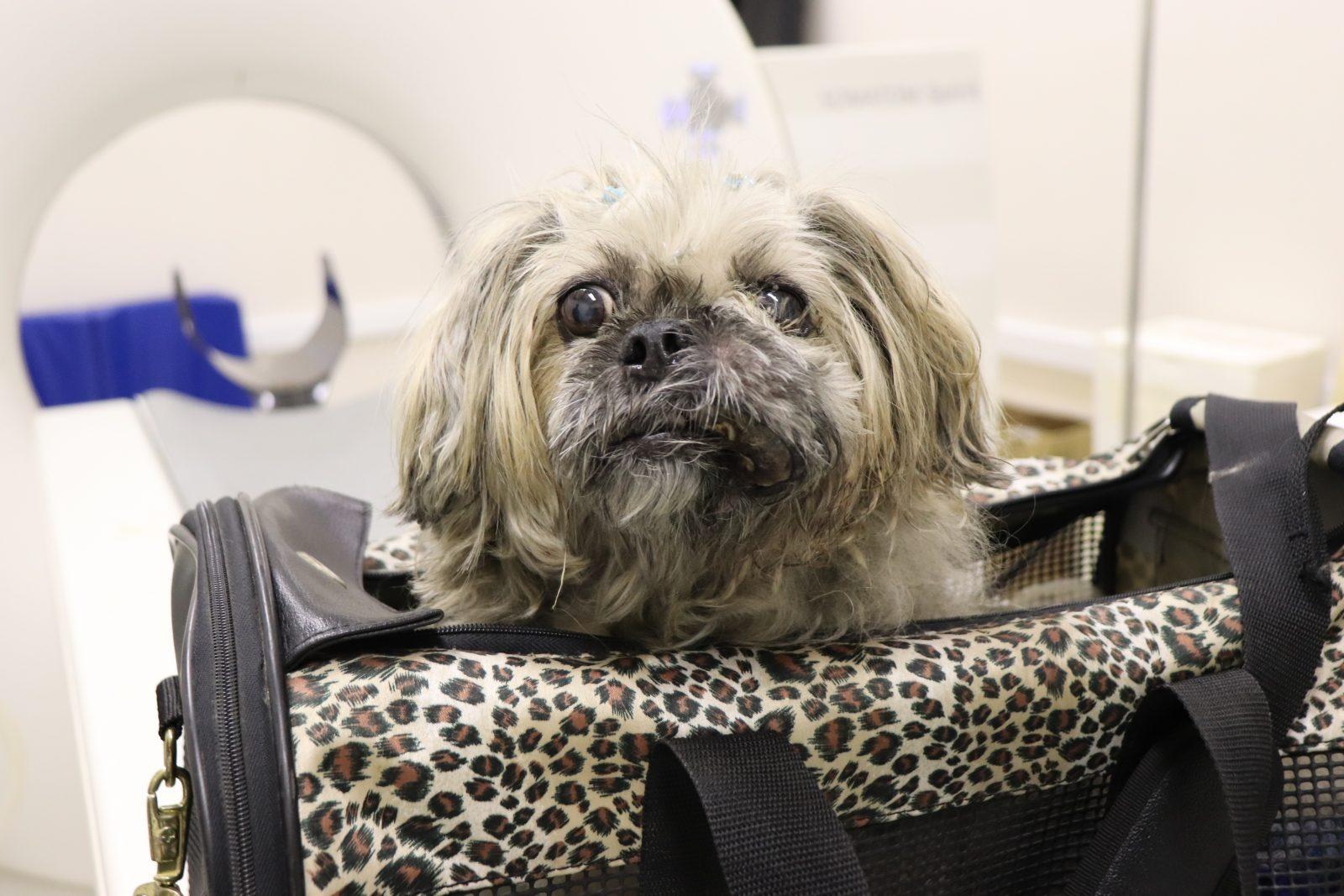 pacaembu kim ressonancia 02 - Cuidados paliativos para cães e gatos