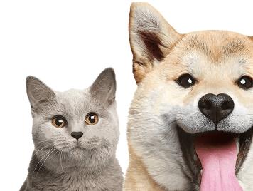 corona - Novo coronavírus não passa para cães e gatos
