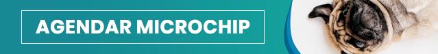 microchip - Microchip em cães e gatos, para que serve?