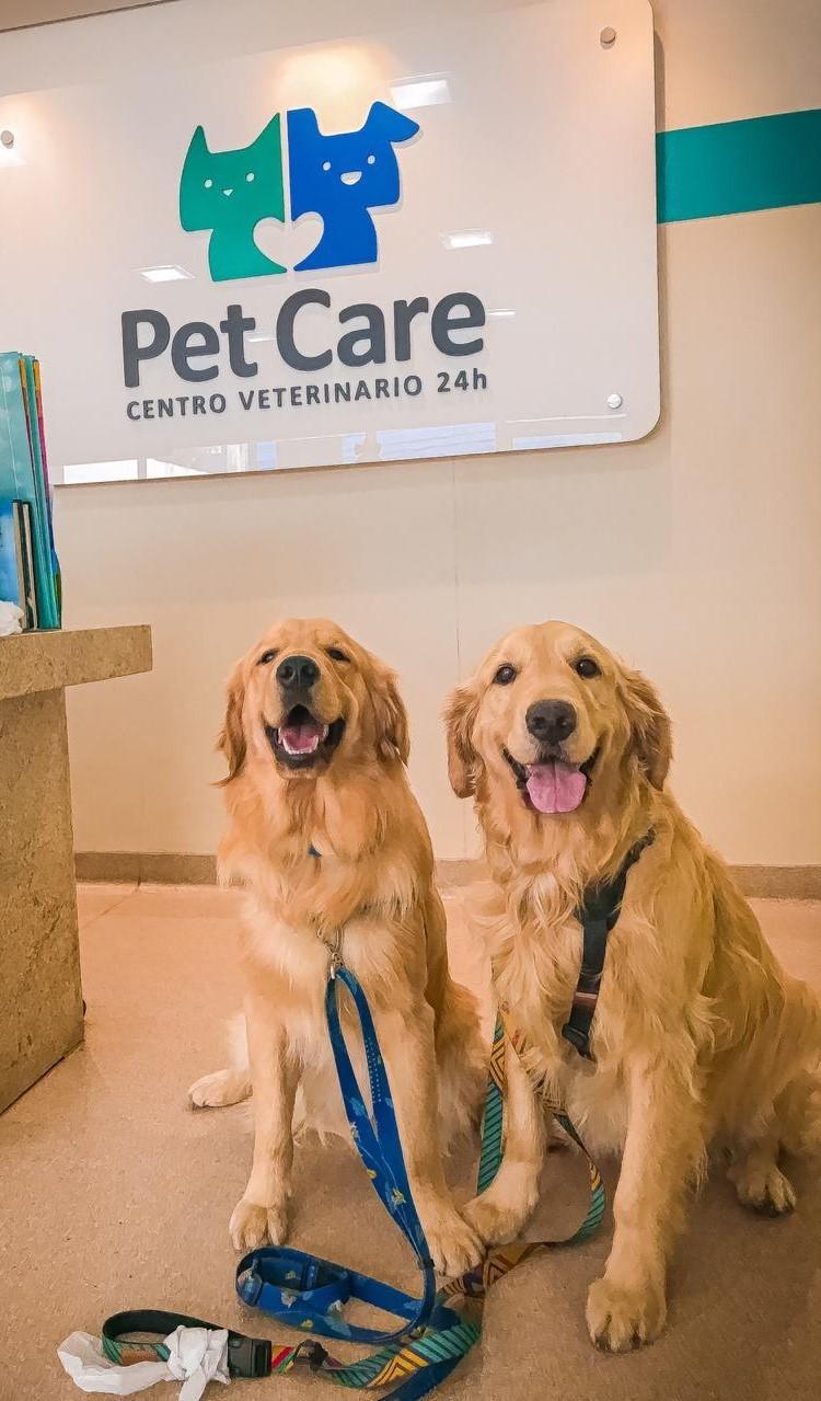 doge thor - Dia Mundial de Conscientização da Epilepsia: convulsão ou crise epiléptica em cães e gatos