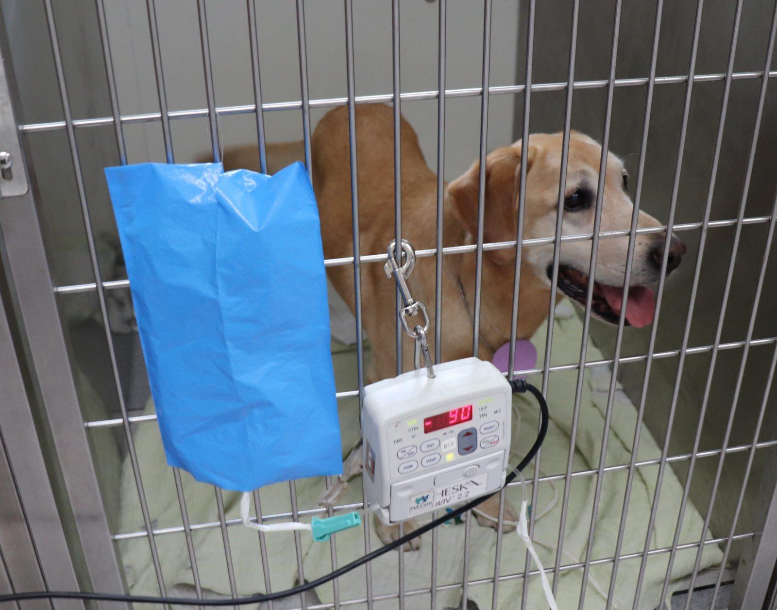 img 2034 - Como é a quimioterapia em cães e gatos?