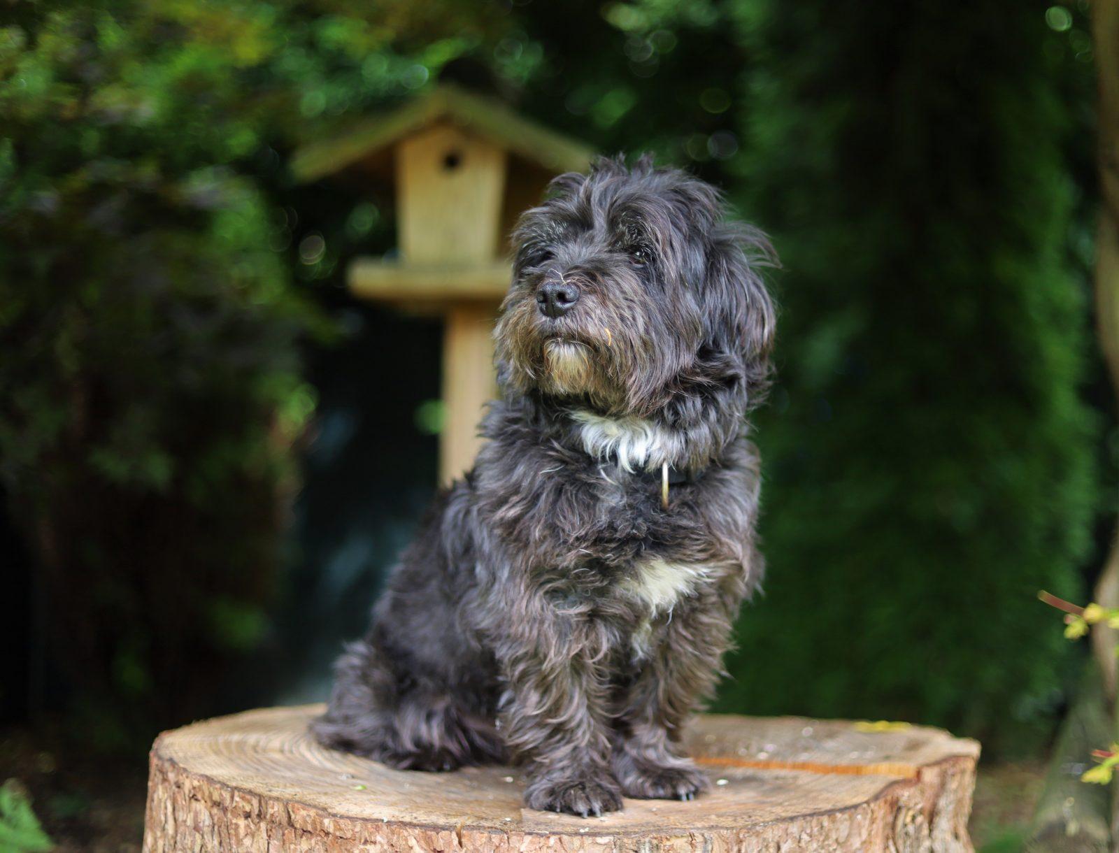 photo of dog sitting on top wood 4069561 - Check-up de quarentena: como descobrir bolinhas na pele do meu pet? O que isso pode ser?