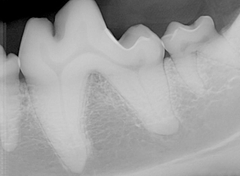 whatsapp image 2020 05 08 at 10 49 50 1 - Por que precisamos tratar os dentes dos cães e gatos na quarentena?