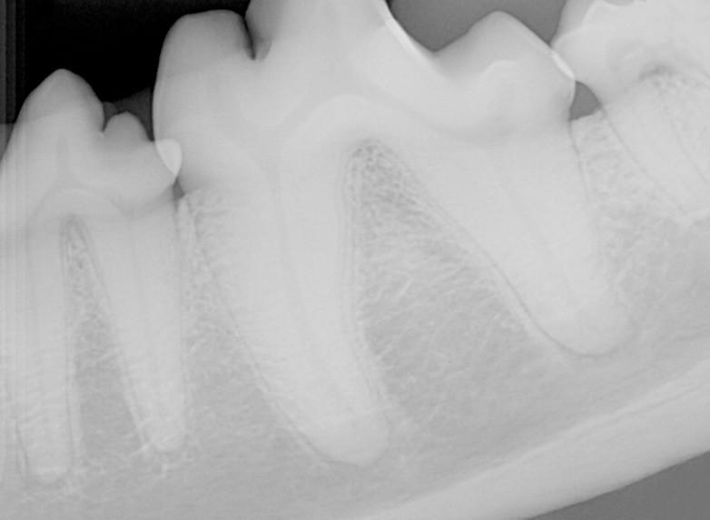 whatsapp image 2020 05 08 at 10 49 50 3 - Por que precisamos tratar os dentes dos cães e gatos na quarentena?