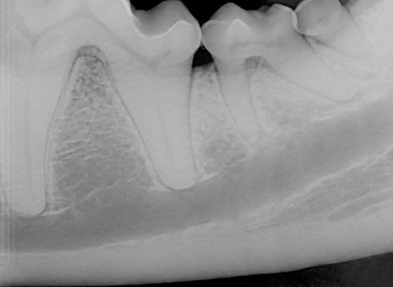 whatsapp image 2020 05 08 at 10 49 51 - Por que precisamos tratar os dentes dos cães e gatos na quarentena?