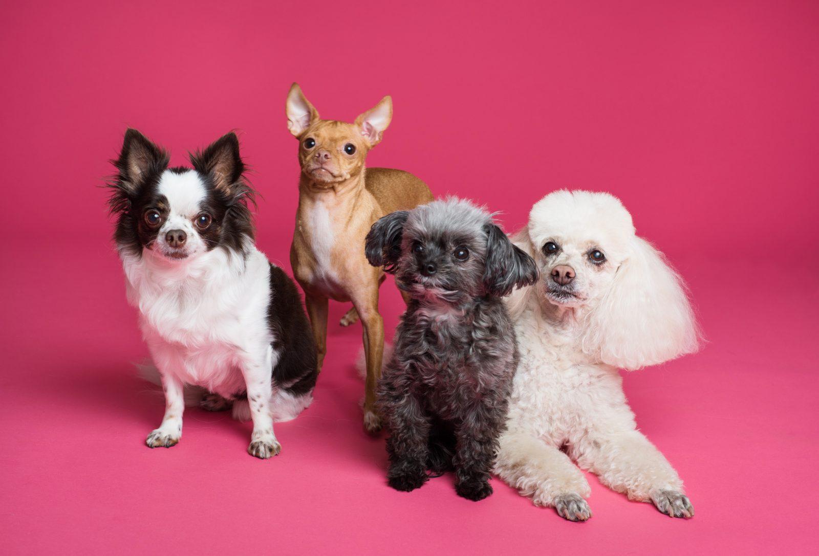 photo of different puppies 3299905 - Como escolher seu cão?