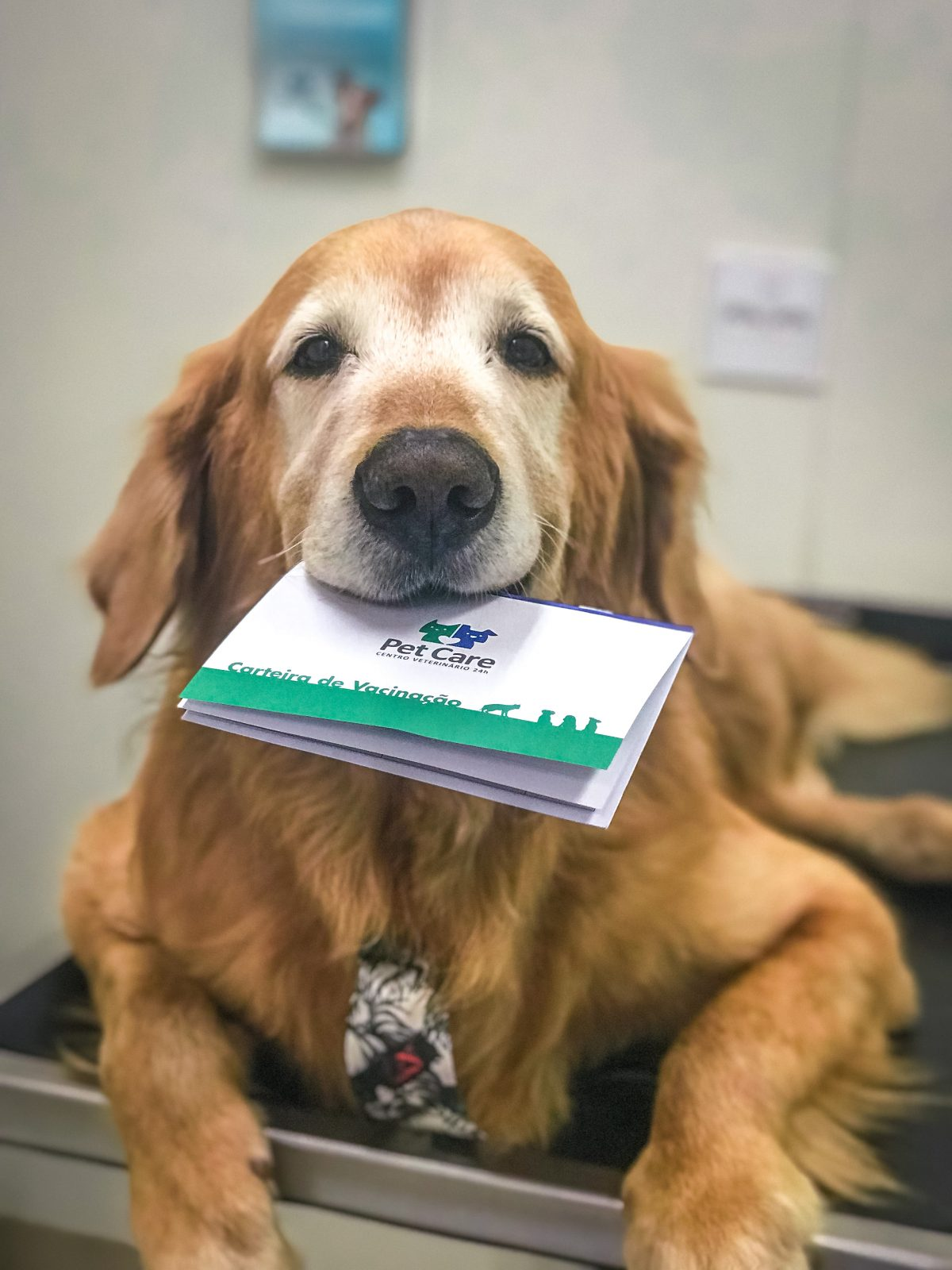 img 1040 - A importância de realizar check-up em cães e gatos