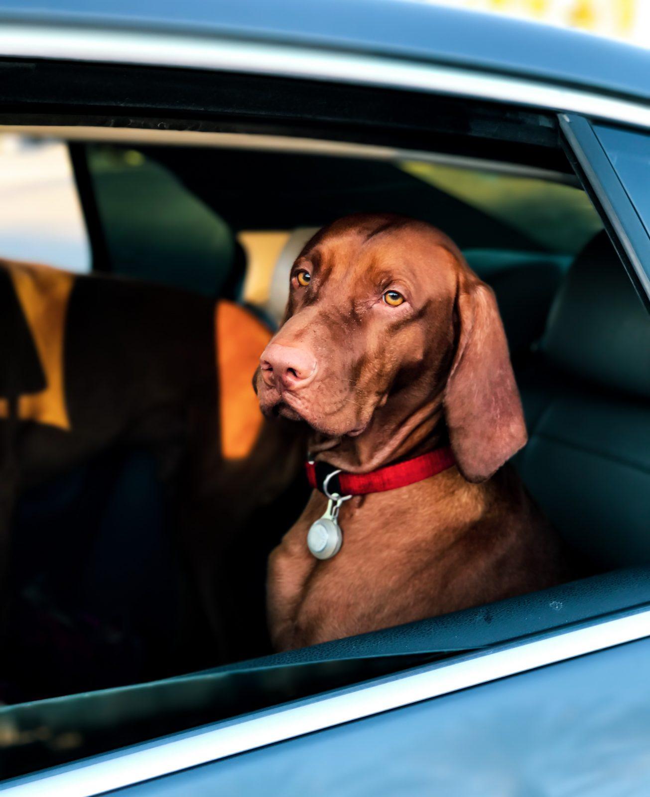 pexels charles roth 2797318 - Cuidados ao viajar de carro com seu pet