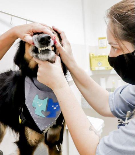 beethove - Cuidados com os dentes de cães e gatos: tratamento periodontal