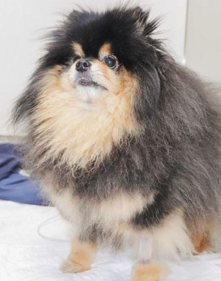 15 de janeiro de 2020 - Sebastião chegou ao Pet Care Pacaembu com anorexia, apatia e dor abdominal.