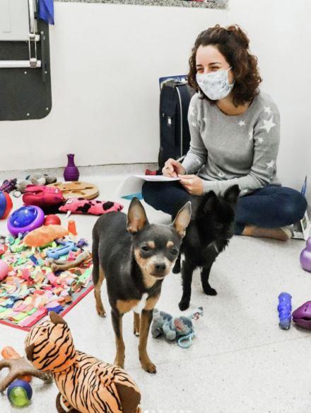 """16 de setembro de 2020 - Por que os cães cheiram o """"bumbum"""" um do outro?"""