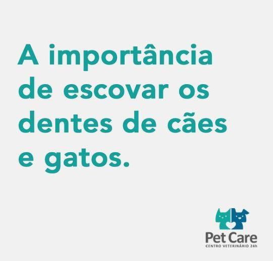 16 02 2021 - Você sabia que, assim como os humanos, cães e gatos devem ter a dentição escovada diariamente?