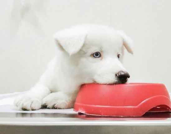 21 de setembro de 2020 - Alimentação de Cães e Gatos