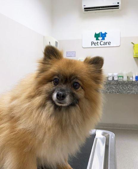 23 de outubro de 2019 - Benjamin é paciente Pet Care e faz exames preventivos