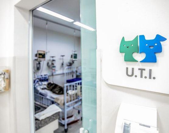 23 de outubro de 2020 - A UTI do Pet Care está localizada na nossa unidade do Ibirapuera.