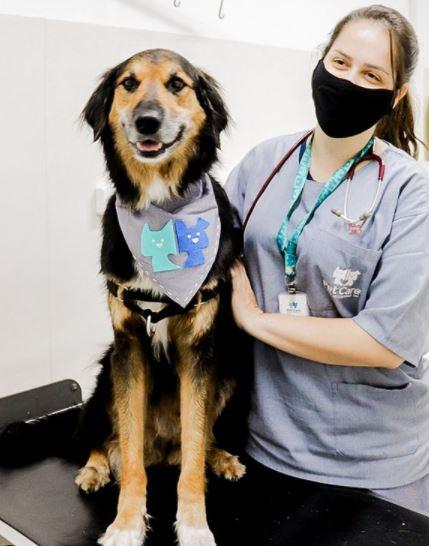 25 de novembro de 2020 - Beethoven foi ao Pet Care Pacaembu para atualizar a sua carteirinha de vacinação. Foi avaliado pela Dra. Natália, tomou a vacina V10 e a antirrábica.
