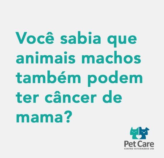 25 de outubro de 2020 - Sim! Apesar de mais raro, animais do sexo masculino podem sim ter câncer de mama.