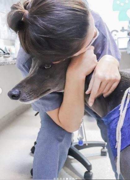 29 de maio de 2020 a - O Austin é esse lindo Greyhound!