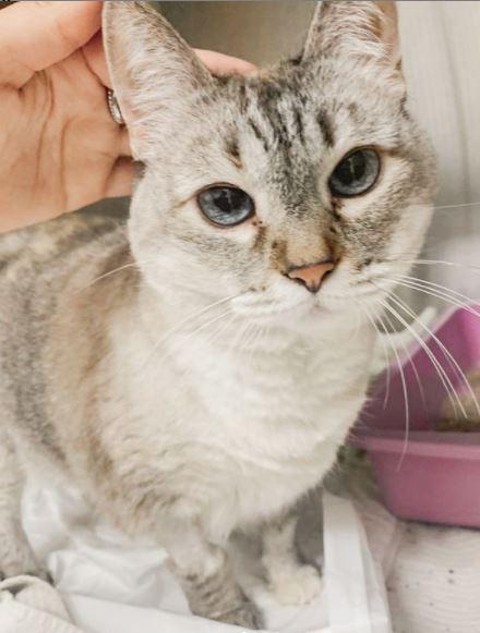 6 de janeiro de 2020 - Essa é a Chica, gatinha que ficou internada no Pet Care Pacaembu!
